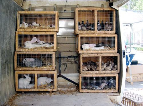animals_cages.jpg