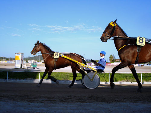 manacor_horses.jpg