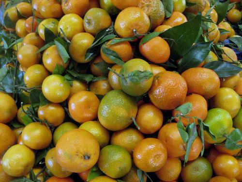 citrus_reticulata.jpg