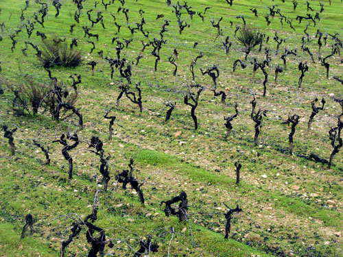 vines.jpg