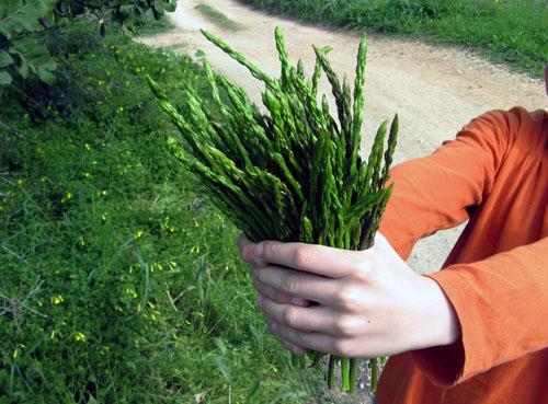 wild_asparagos.jpg