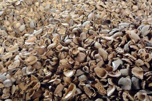 almond_shells