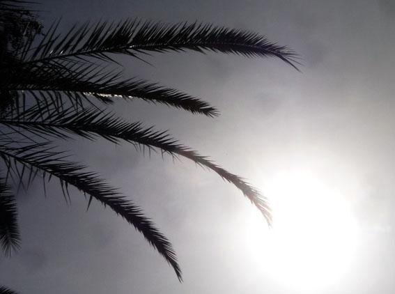 sahara_sun