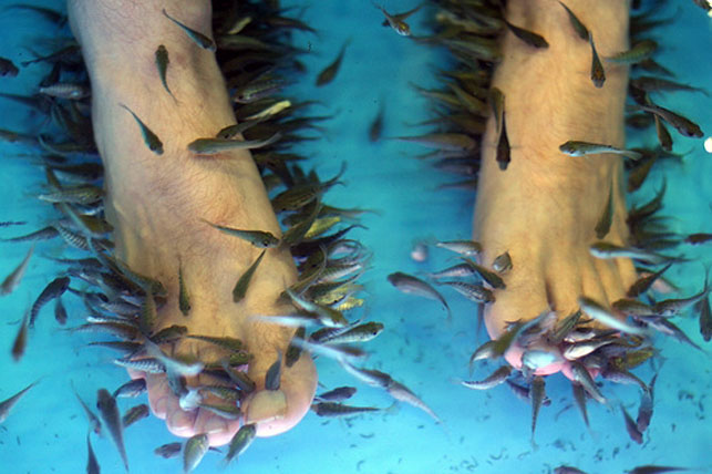 Are Garra Rufa Fish Pedicures Safe? | Bellatory