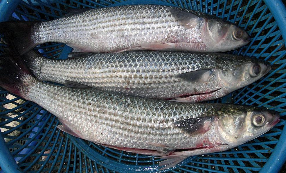A Fish Called Lisa The Mallorca Photo Blog